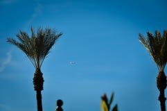 Palmeras y avión Fotos de archivo libres de regalías