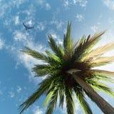 Palmeras y cielo Fotografía de archivo libre de regalías