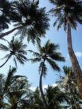 Palmeras y cielo azul foto de archivo