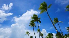 Palmeras y cielo azul almacen de video