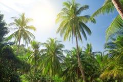 Palmeras y cielo del coco con el sol Imágenes de archivo libres de regalías