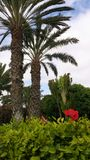 Palmeras y Flor do engodo de Jardin imagem de stock