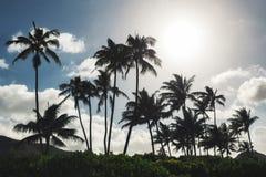 Palmeras y fondo del cielo azul en la playa tropical de Oahu imagenes de archivo