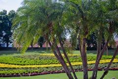 Palmeras y jardín de flor Imagen de archivo
