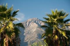 Palmeras y montañas Fotos de archivo