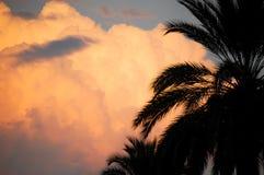 Palmeras y nube Imagen de archivo libre de regalías