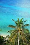 Palmeras y océano Imágenes de archivo libres de regalías
