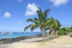 Palmeras y playa Fotos de archivo