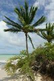 Palmeras y playa imágenes de archivo libres de regalías