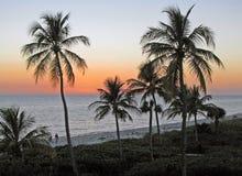 Palmeras y puesta del sol del océano Imagen de archivo
