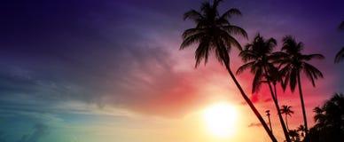 Palmeras y puesta del sol en Caribean foto de archivo