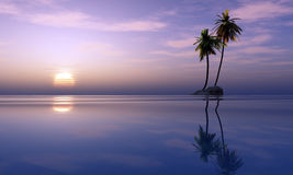 Palmeras y puesta del sol tropical Fotos de archivo