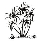 Palmeras y siluetas de la hierba Fotografía de archivo
