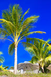 Palmeras y sombrillas en una playa tropical, el cielo en Fotografía de archivo