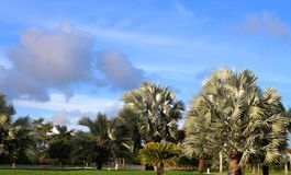 Palmeras y un cielo azul Fotografía de archivo libre de regalías