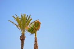Palmeras y un cielo azul despejado Fotografía de archivo