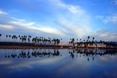 Palmeras y un lago Foto de archivo libre de regalías