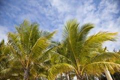 Palmes Стоковое Изображение RF