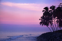 Palmeschattenbild Stockfoto