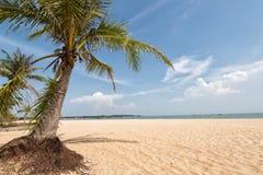 Palmeschattenbild auf Paradiessonnenuntergang Stockfoto