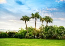 Palmeschattenbild auf Paradiessonnenuntergang Lizenzfreies Stockfoto
