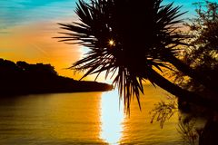 Palmeschattenbild auf Sonnenuntergang tropisches beach Lizenzfreies Stockfoto