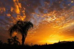 Palmeschattenbild auf tropischem Strand des Sonnenuntergangs Lizenzfreies Stockbild