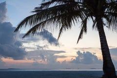 Palmeschattenbild auf tropischem Strand des Sonnenuntergangs Lizenzfreies Stockfoto