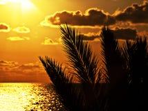 Palmeschattenbild bei Sonnenuntergang auf dem Strand Stockfotos