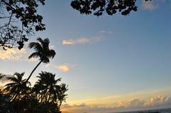 Palmeschattenbild gegen Sonnenuntergang Stockfotografie