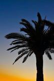 Palmeschattenbild am Sonnenuntergang Lizenzfreies Stockfoto