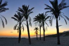 Palmeschattenbilder - Costa Del Sol Lizenzfreies Stockbild