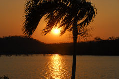 Palmesonnenuntergang über einem See. lizenzfreie stockfotos