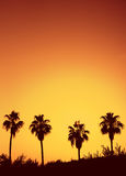 Palmesonnenuntergang Lizenzfreies Stockbild