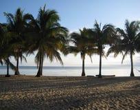 Palmestrand Morgensonne Hopkins Belize lizenzfreie stockfotos