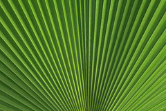 Palmette Image stock
