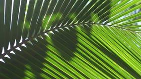 Palmette avec l'éclat du soleil