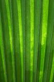 Palmette avec les lignes verticales (verticales) Images libres de droits