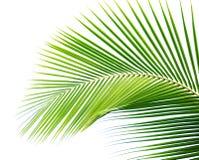 Palmette Images stock