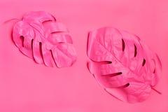 Palmette deux tropicale rose de monstera concept rose de mode minimalisme Concept d'?t? Art de concept photo stock