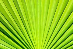 Palmette fraîche et verte un jour ensoleillé Modèle diagonal, l'espace de copie Fond d'été, texture naturelle photographie stock