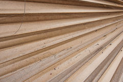Palmette sèche de sucre Image stock