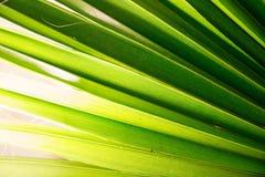 Palmette tropicale dans la macro photo avec les lignes abstraites Photographie stock