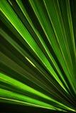 Palmette verte Images stock