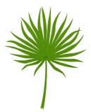 Palmette verte Image stock