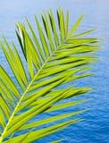 Palmette verte fraîche au-dessus de mer bleue Photos stock