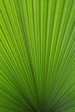 Palmette verte version2 Image libre de droits