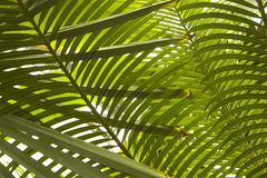 Palmettes Images stock