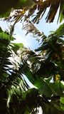 Palmettes photo stock