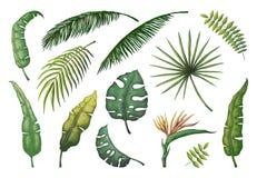 Palmettes Arbres tirés par la main de jungle, usines décoratives de cru de noix de coco florale de banane, feuille exotique verte illustration libre de droits